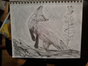 Red Fox, pencil on paper, 9
